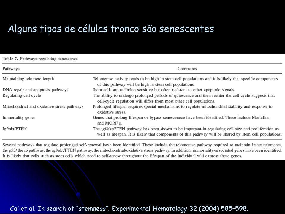 Alguns tipos de células tronco são senescentes
