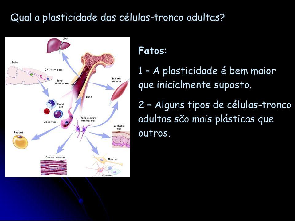 Qual a plasticidade das células-tronco adultas