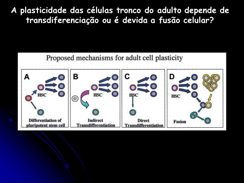 A plasticidade das células tronco do adulto depende de transdiferenciação ou é devida a fusão celular