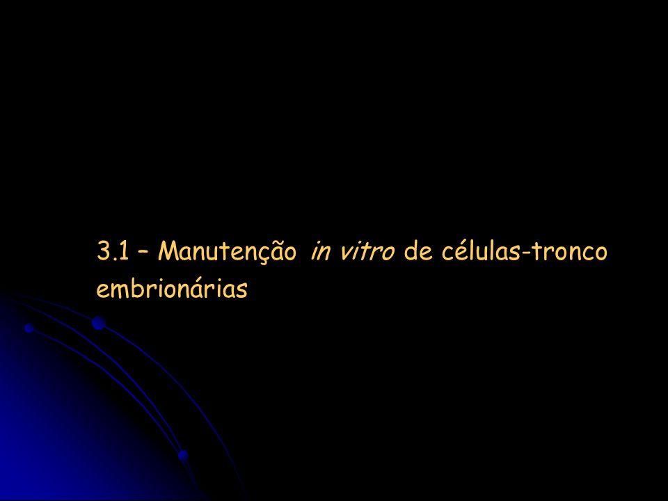 3.1 – Manutenção in vitro de células-tronco embrionárias