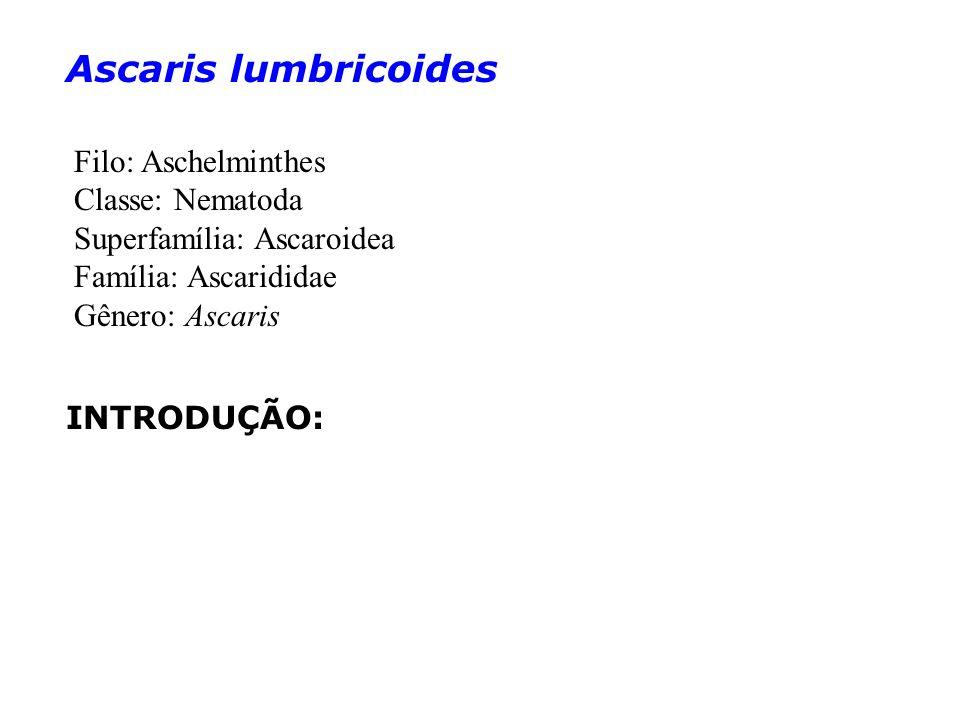 Ascaris lumbricoides Filo: Aschelminthes Classe: Nematoda