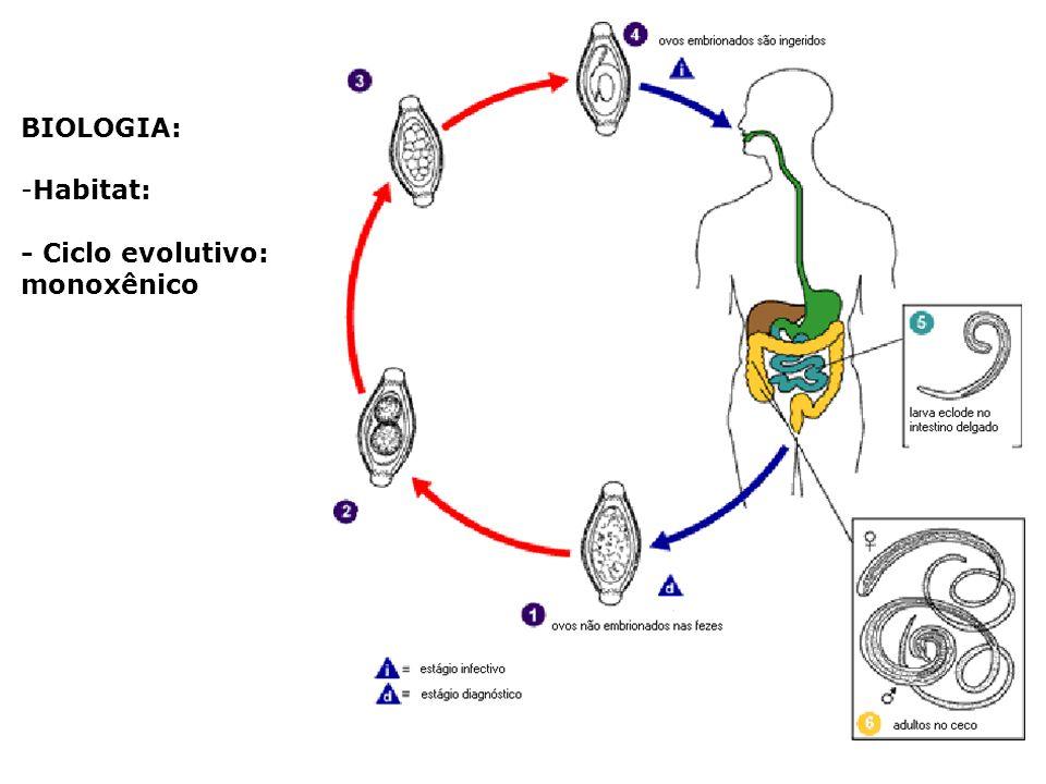 BIOLOGIA: Habitat: - Ciclo evolutivo: monoxênico