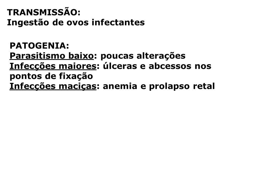 TRANSMISSÃO: Ingestão de ovos infectantes. PATOGENIA: Parasitismo baixo: poucas alterações.
