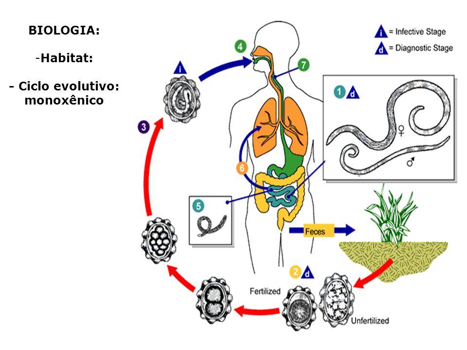 - Ciclo evolutivo: monoxênico