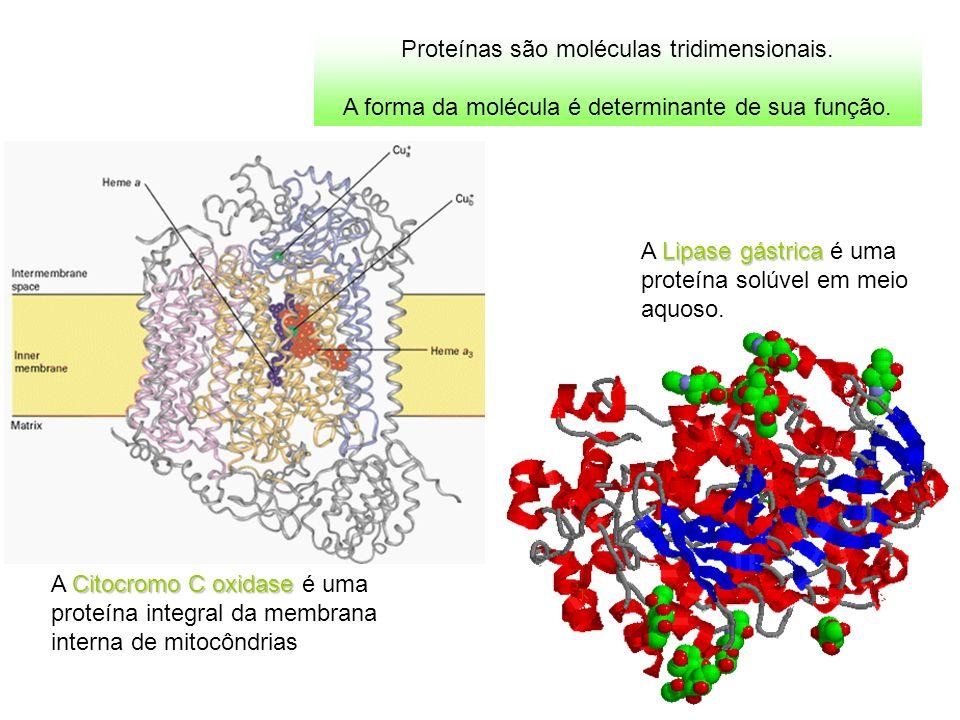 Proteínas são moléculas tridimensionais.
