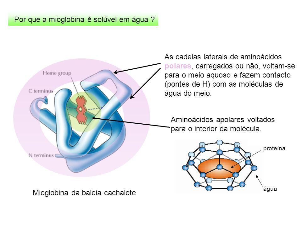 Por que a mioglobina é solúvel em água