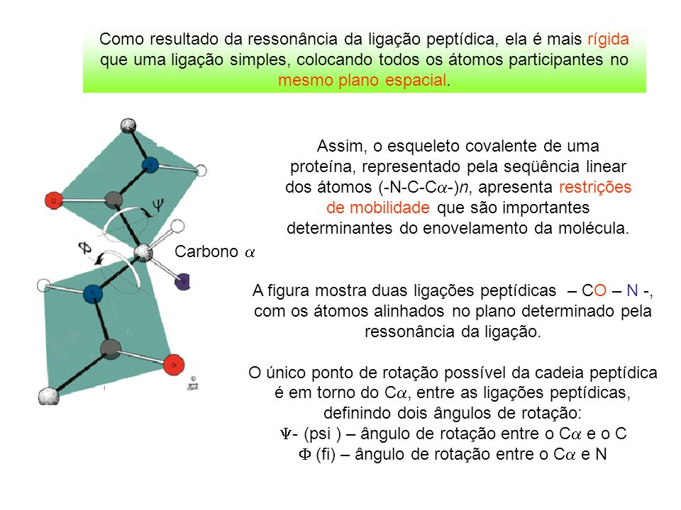 Y- (psi ) – ângulo de rotação entre o Ca e o C