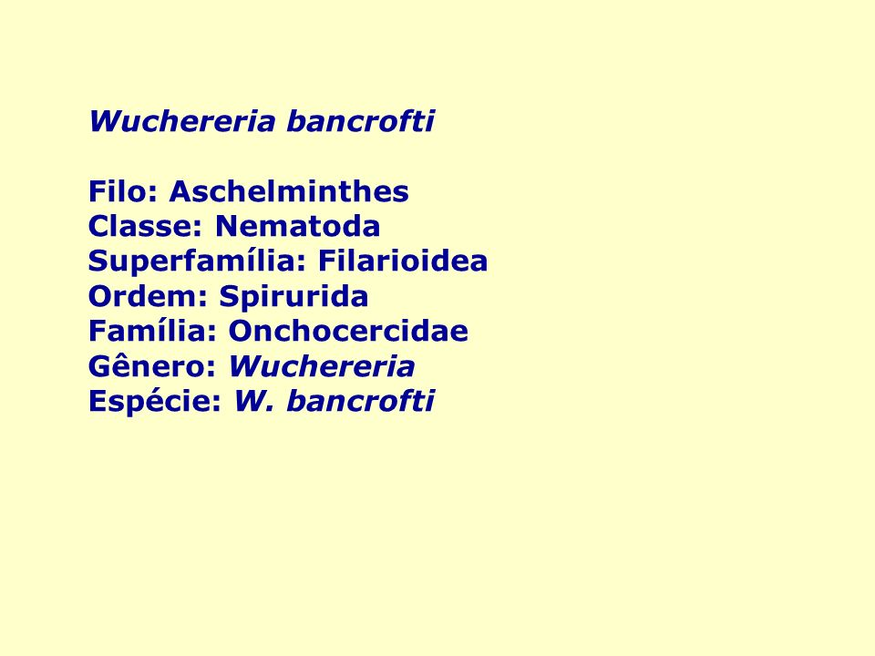 Wuchereria bancrofti Filo: Aschelminthes. Classe: Nematoda. Superfamília: Filarioidea. Ordem: Spirurida.