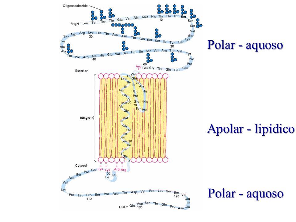 Polar - aquoso Apolar - lipídico Polar - aquoso