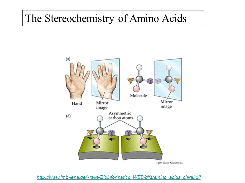 The Stereochemistry of Amino Acids