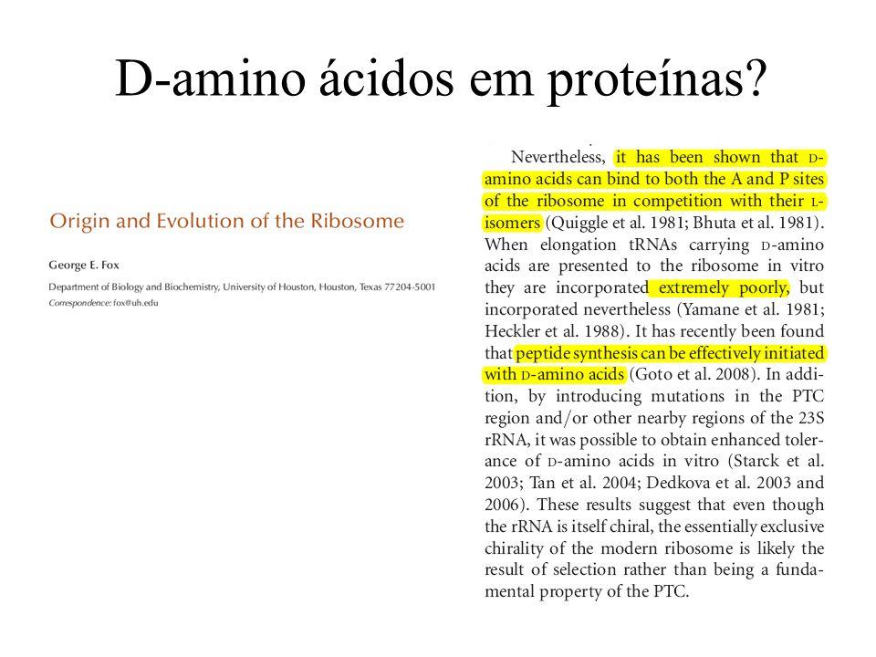D-amino ácidos em proteínas