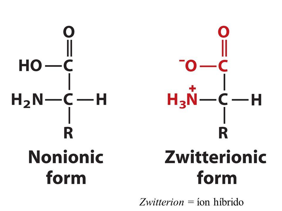 Zwitterion = íon híbrido