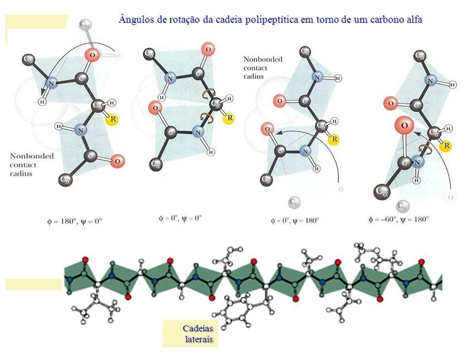 Ângulos de rotação da cadeia polipeptítica em torno de um carbono alfa