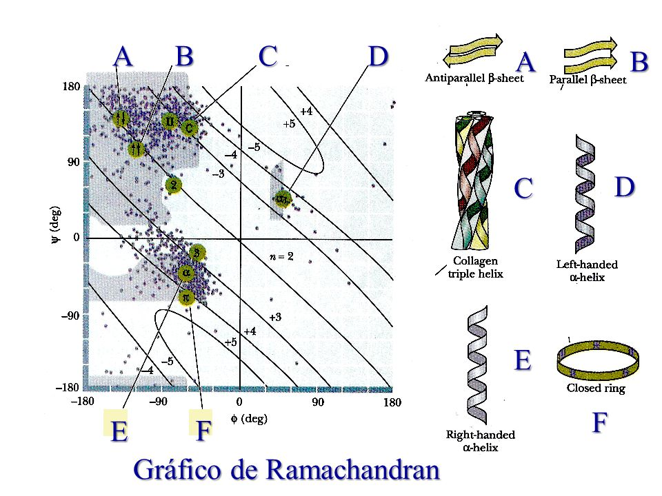 A B C D E F Gráfico de Ramachandran