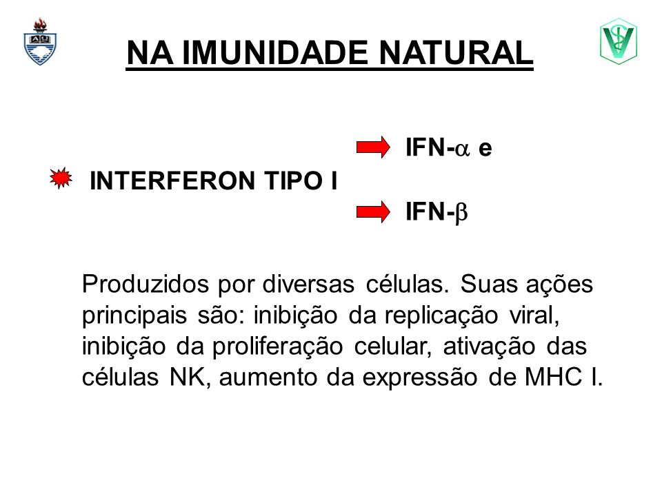 NA IMUNIDADE NATURAL IFN- e INTERFERON TIPO I IFN-