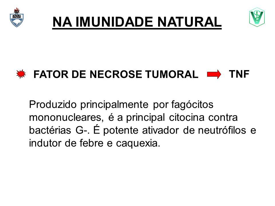 NA IMUNIDADE NATURAL FATOR DE NECROSE TUMORAL TNF