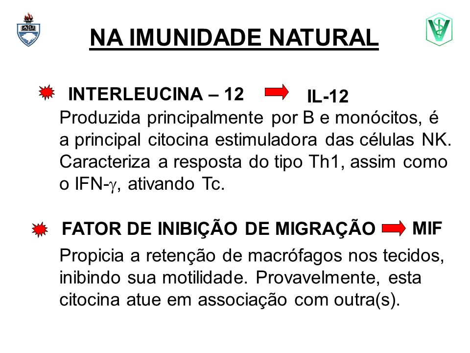 NA IMUNIDADE NATURAL INTERLEUCINA – 12 IL-12