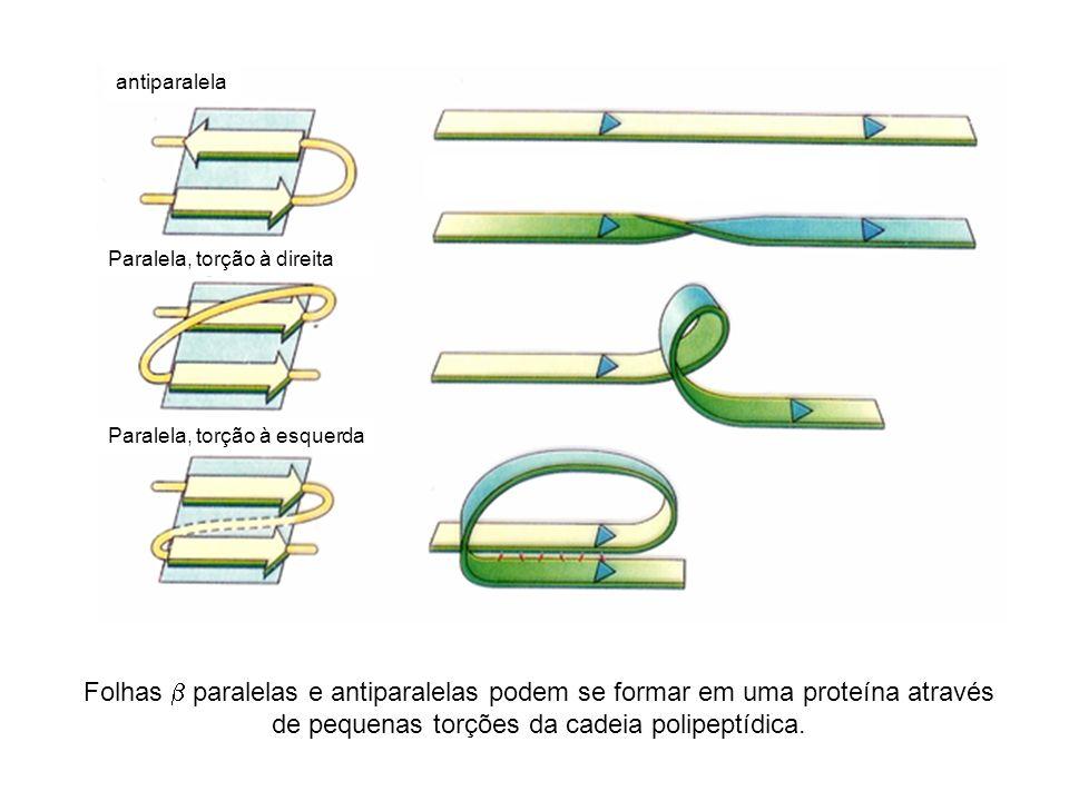 antiparalela Paralela, torção à direita. Paralela, torção à esquerda.