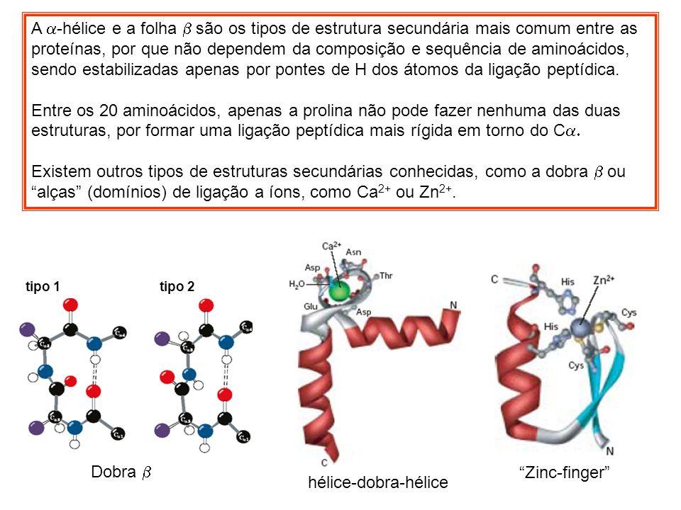 A a-hélice e a folha b são os tipos de estrutura secundária mais comum entre as proteínas, por que não dependem da composição e sequência de aminoácidos, sendo estabilizadas apenas por pontes de H dos átomos da ligação peptídica.