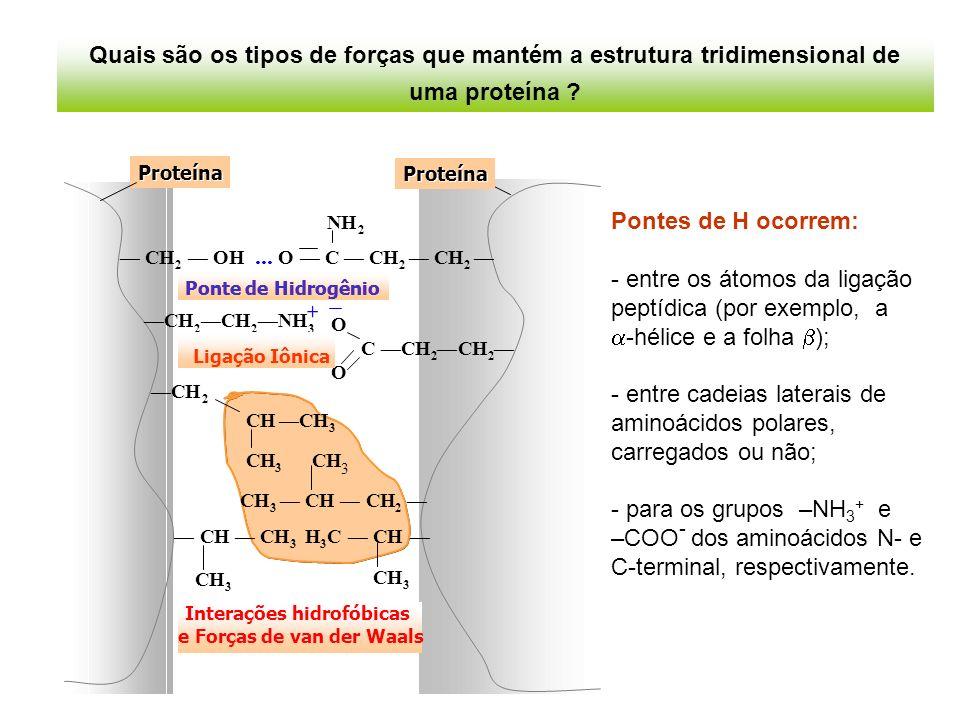 entre cadeias laterais de aminoácidos polares, carregados ou não;