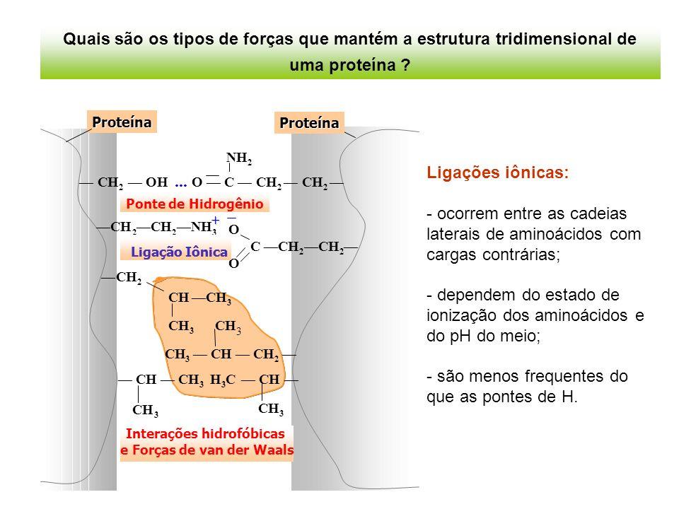 dependem do estado de ionização dos aminoácidos e do pH do meio;