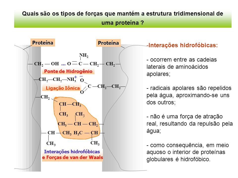 Interações hidrofóbicas: