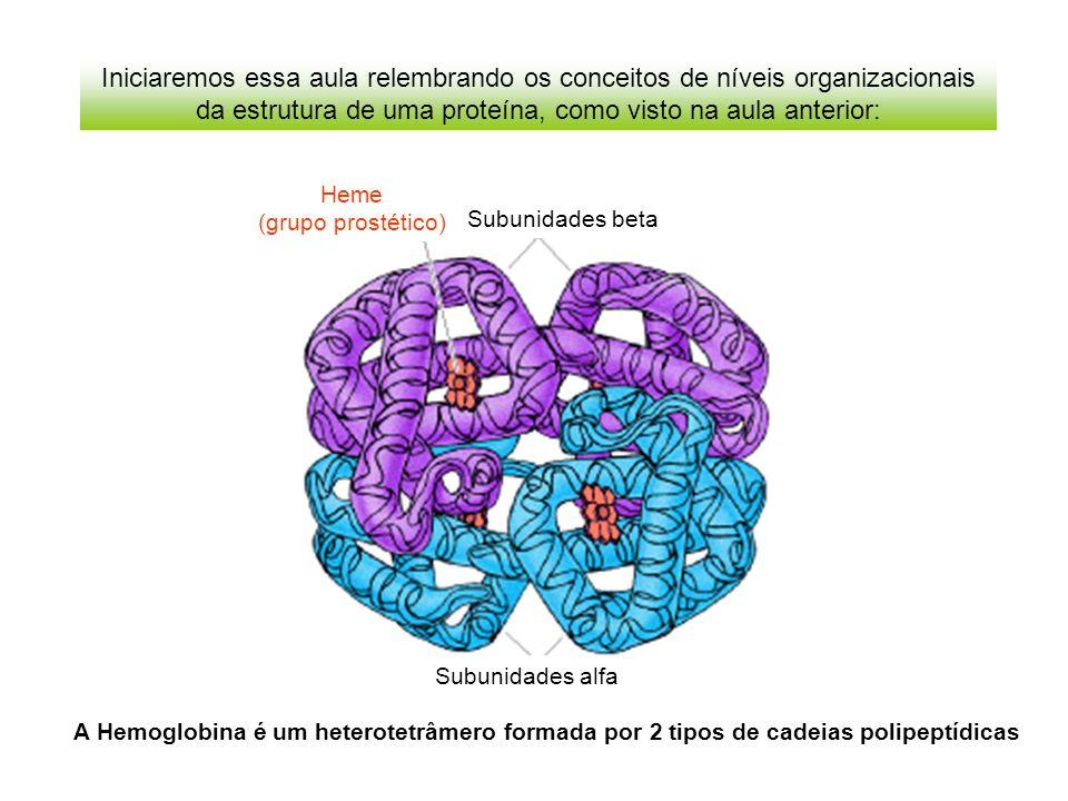 Iniciaremos essa aula relembrando os conceitos de níveis organizacionais da estrutura de uma proteína, como visto na aula anterior: