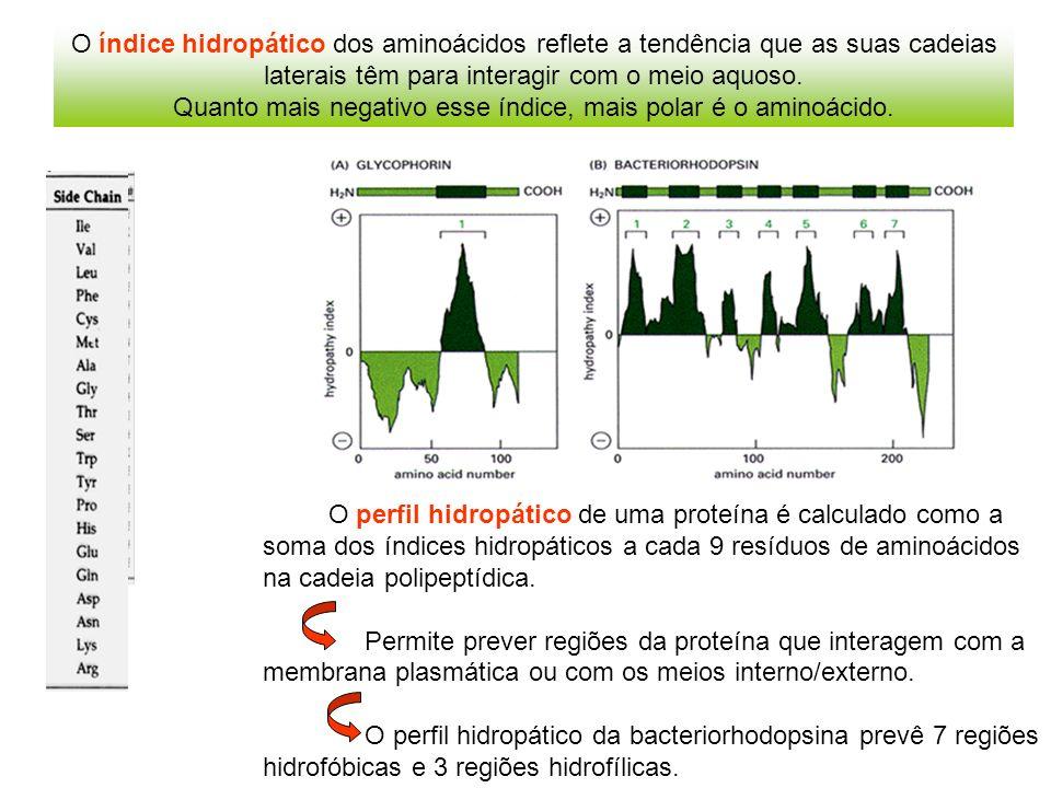 Quanto mais negativo esse índice, mais polar é o aminoácido.