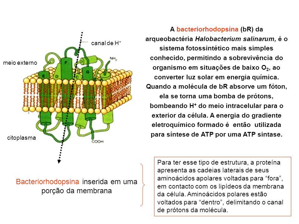 Bacteriorhodopsina inserida em uma porção da membrana