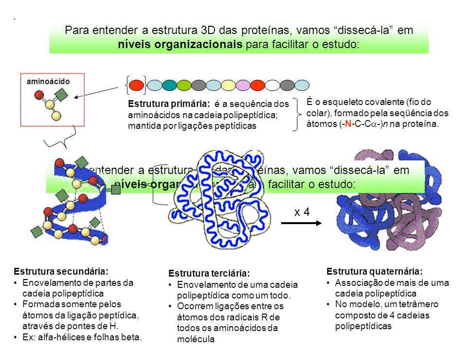 . Para entender a estrutura 3D das proteínas, vamos dissecá-la em níveis organizacionais para facilitar o estudo: