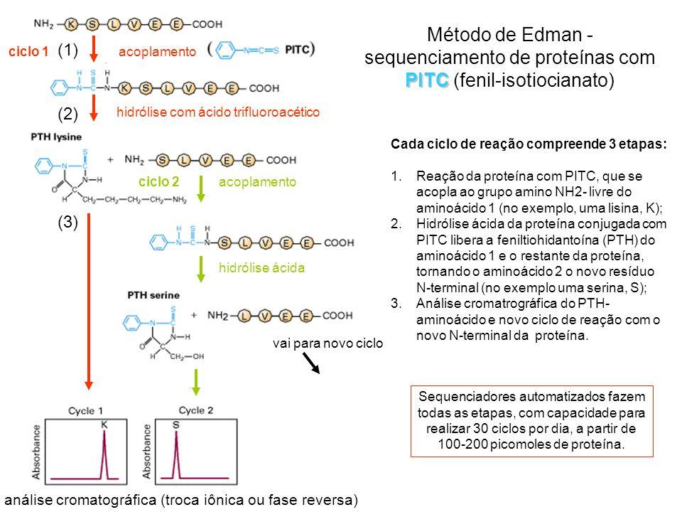 ciclo 1 ciclo 2. hidrólise com ácido trifluoroacético. hidrólise ácida. vai para novo ciclo.
