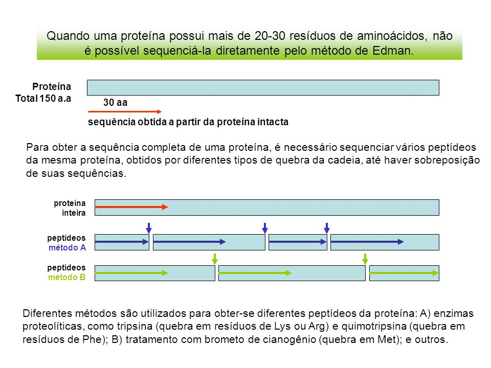 Quando uma proteína possui mais de 20-30 resíduos de aminoácidos, não é possível sequenciá-la diretamente pelo método de Edman.