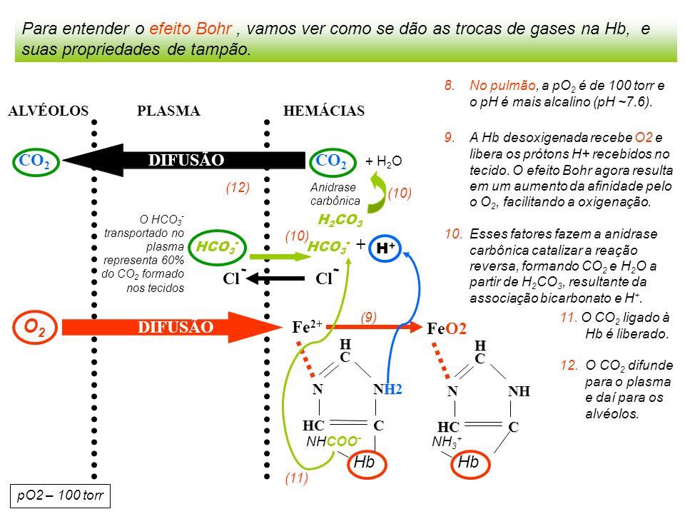 Para entender o efeito Bohr , vamos ver como se dão as trocas de gases na Hb, e suas propriedades de tampão.