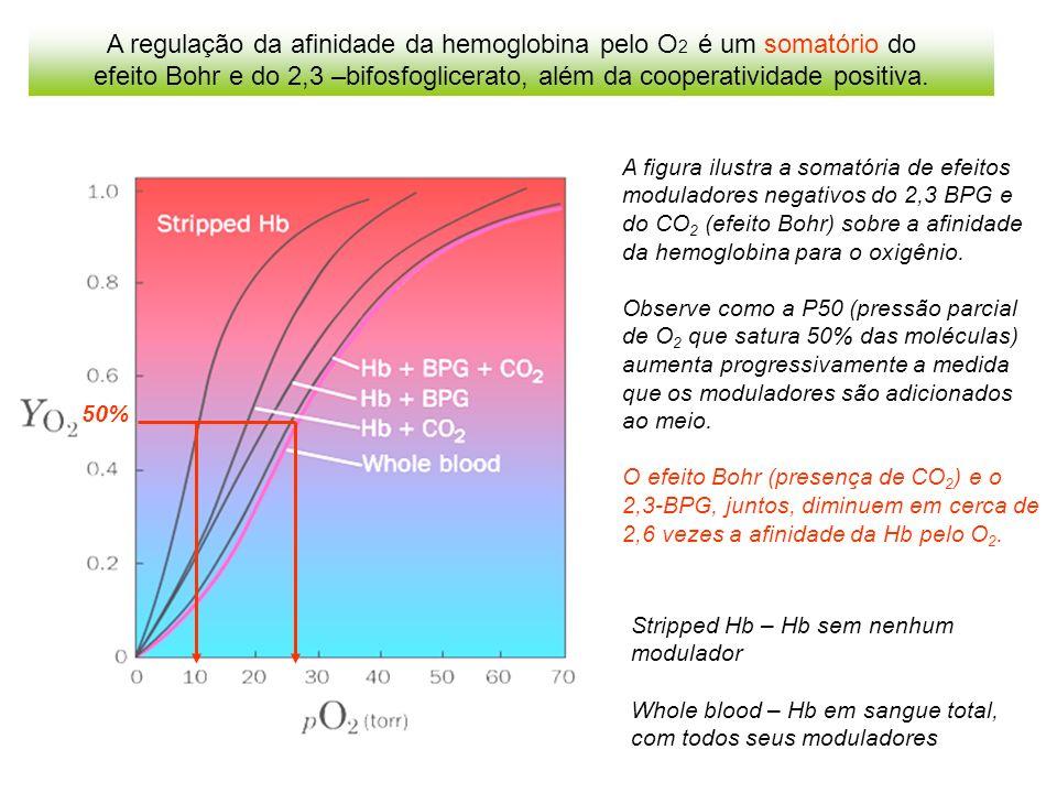 A regulação da afinidade da hemoglobina pelo O2 é um somatório do