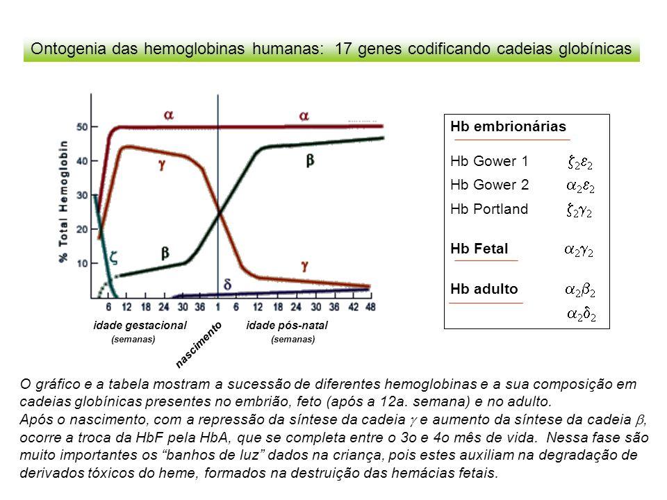 Ontogenia das hemoglobinas humanas: 17 genes codificando cadeias globínicas