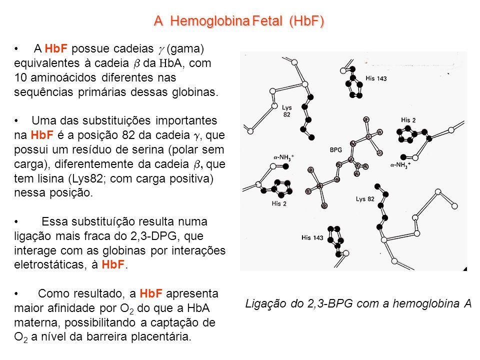 A Hemoglobina Fetal (HbF)