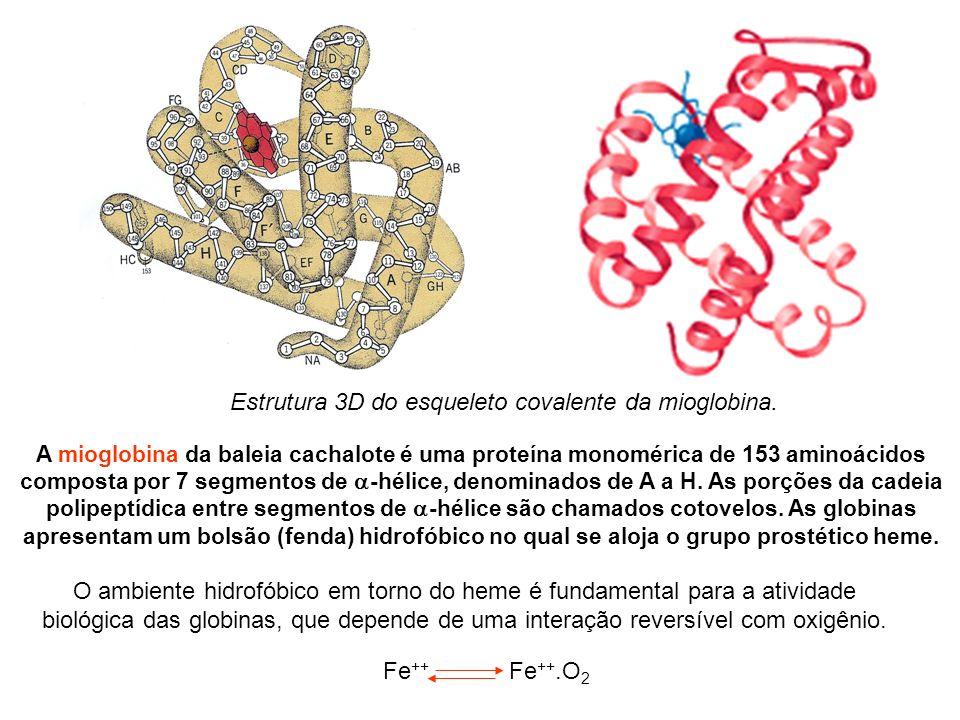 Estrutura 3D do esqueleto covalente da mioglobina.
