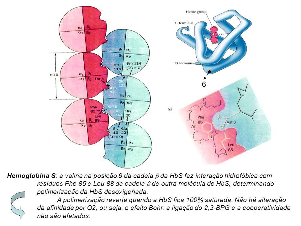 6 Hemoglobina S: a valina na posição 6 da cadeia b da HbS faz interação hidrofóbica com.