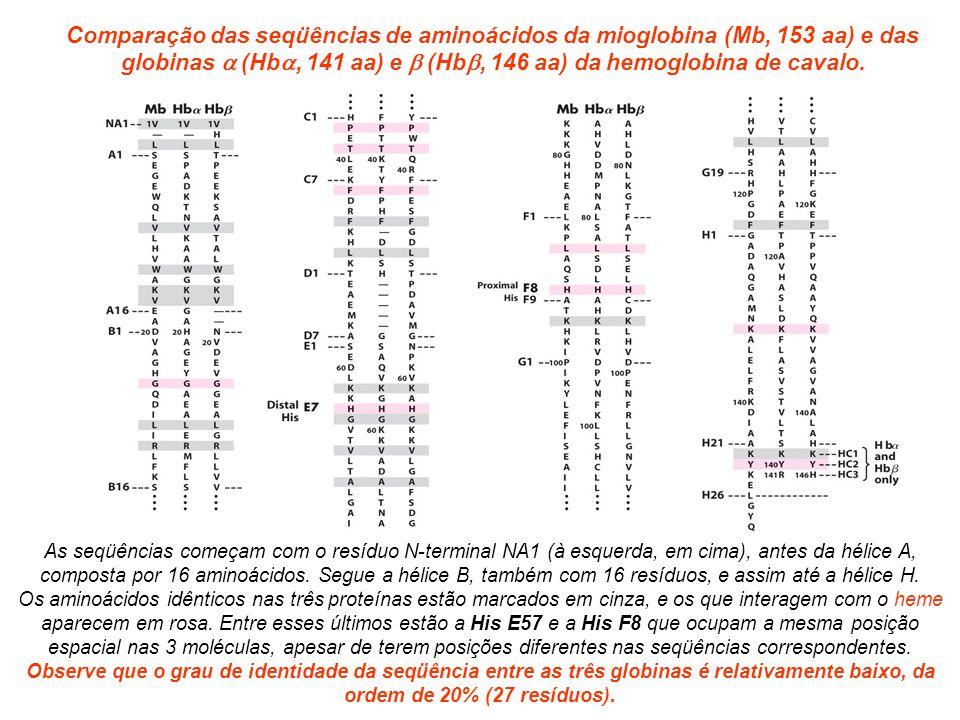 globinas a (Hba, 141 aa) e b (Hbb, 146 aa) da hemoglobina de cavalo.