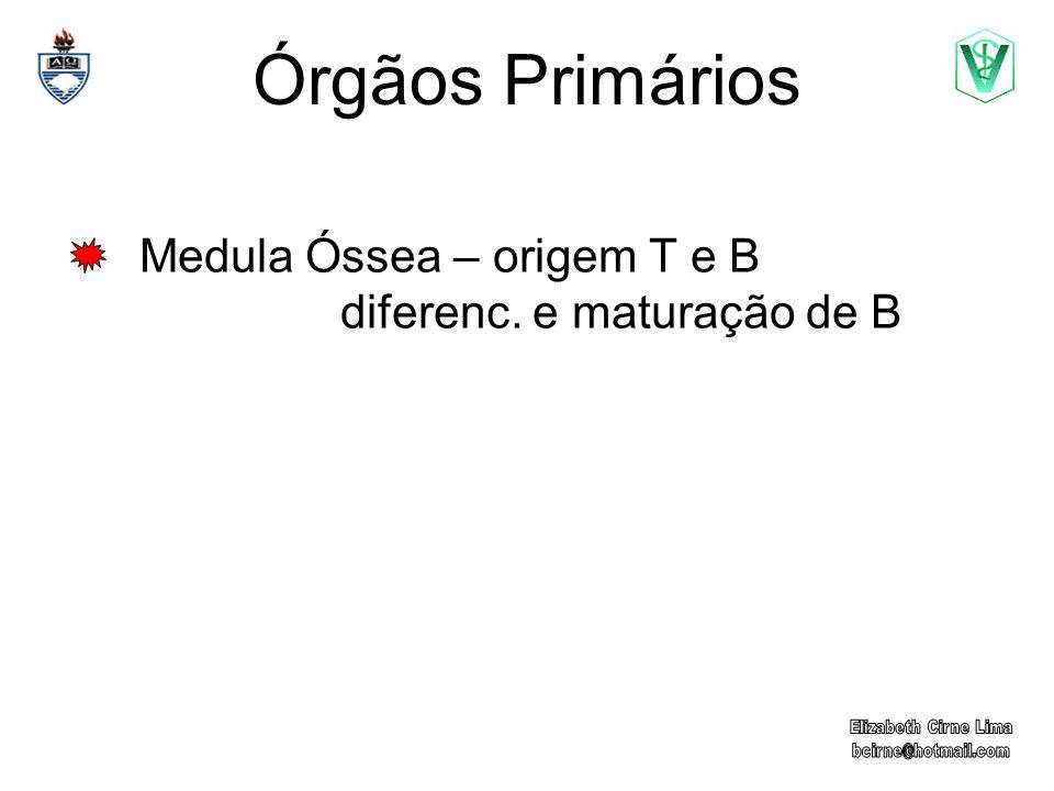 Medula Óssea – origem T e B diferenc. e maturação de B