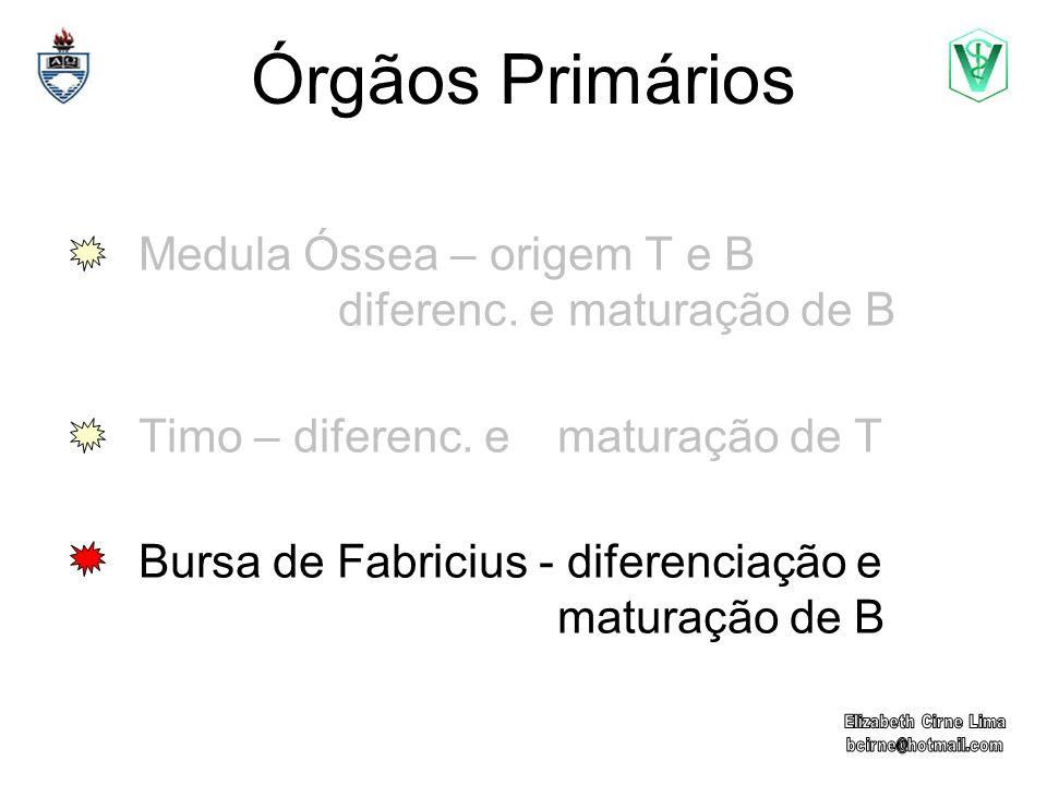 Órgãos Primários Medula Óssea – origem T e B