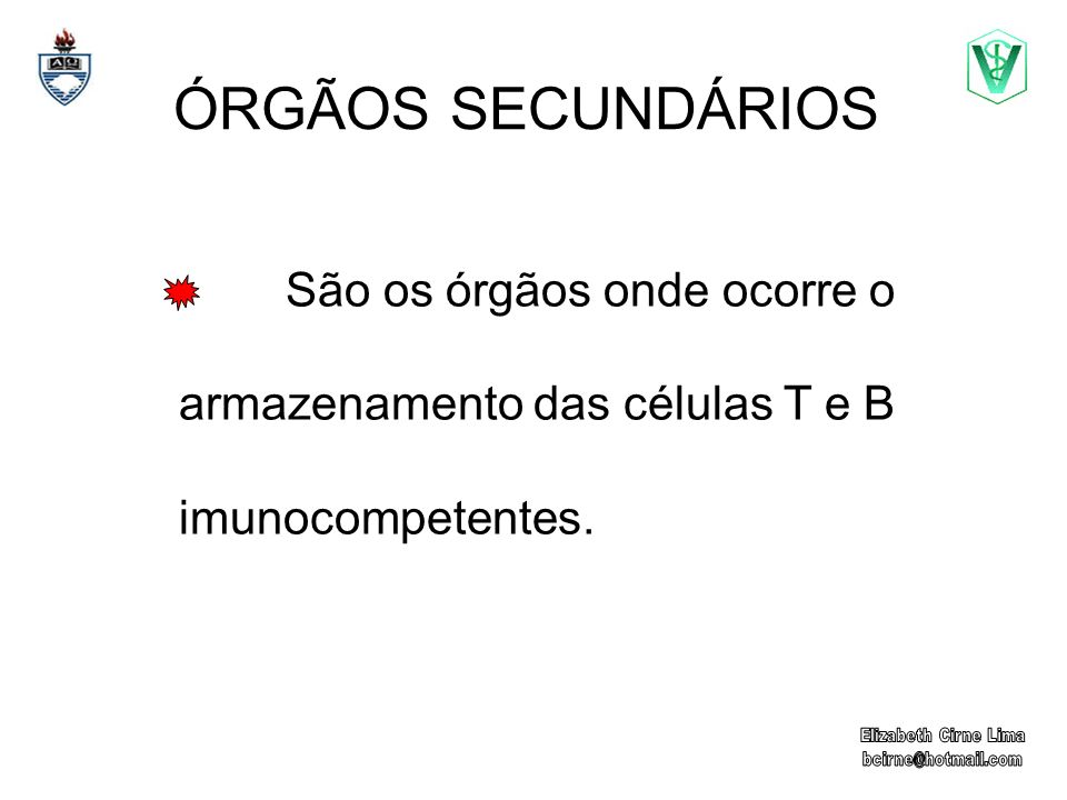 ÓRGÃOS SECUNDÁRIOS São os órgãos onde ocorre o armazenamento das células T e B imunocompetentes. Elizabeth Cirne Lima.
