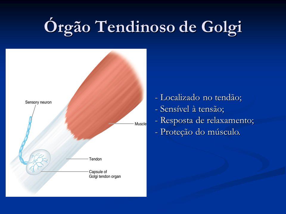 Órgão Tendinoso de Golgi