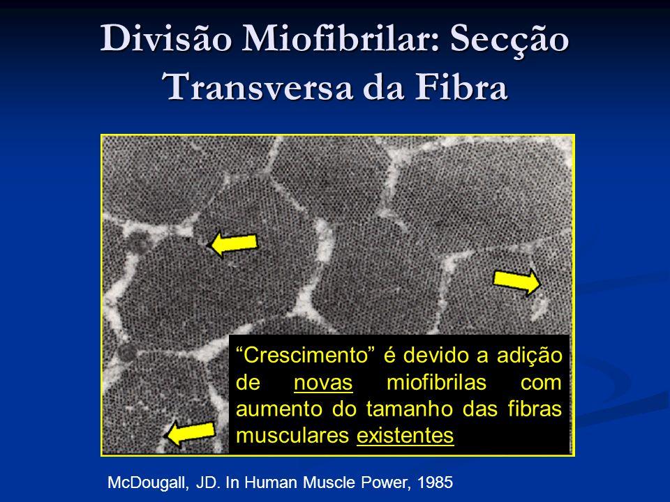 Divisão Miofibrilar: Secção Transversa da Fibra