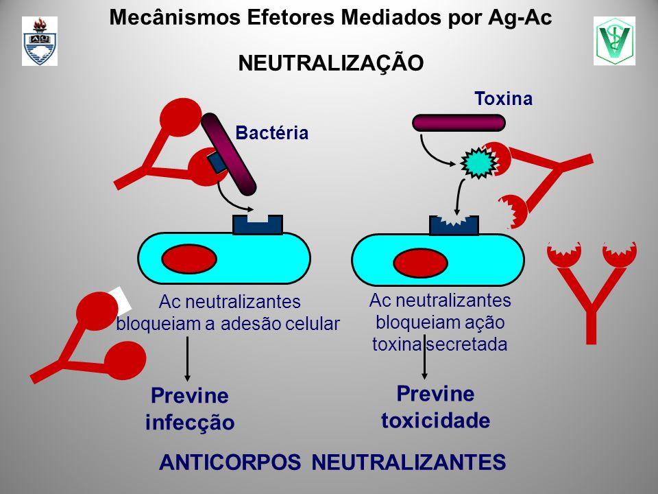 Mecânismos Efetores Mediados por Ag-Ac ANTICORPOS NEUTRALIZANTES