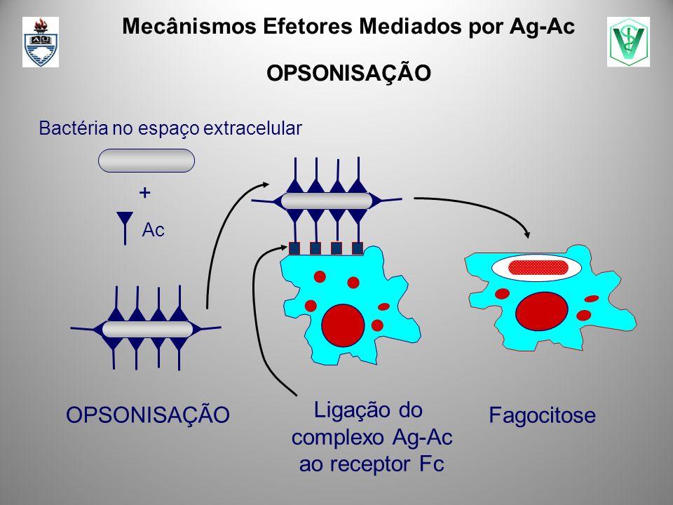 Mecânismos Efetores Mediados por Ag-Ac