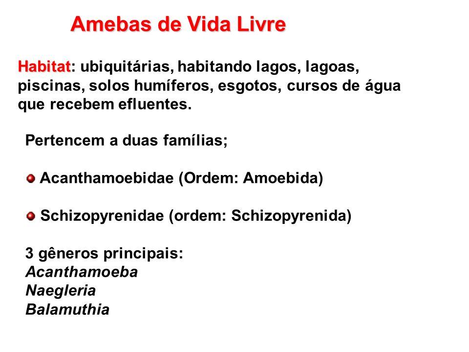 Amebas de Vida LivreHabitat: ubiquitárias, habitando lagos, lagoas, piscinas, solos humíferos, esgotos, cursos de água que recebem efluentes.