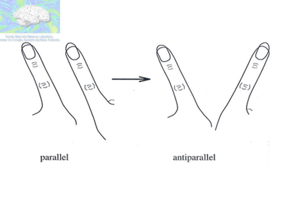 A tarefa da movimentação dos dedos indicadores…
