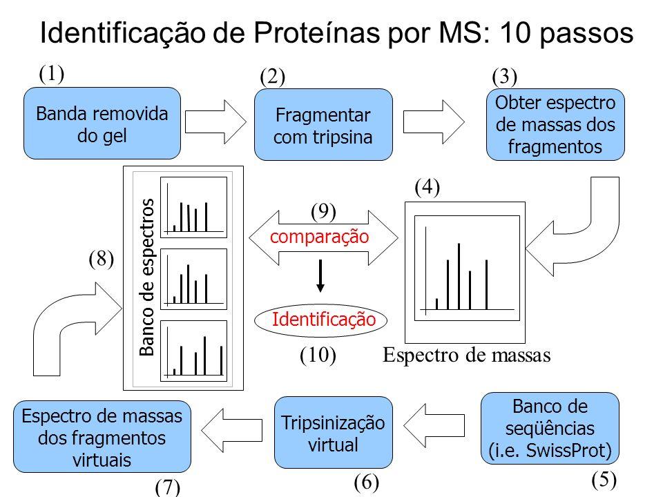 Identificação de Proteínas por MS: 10 passos