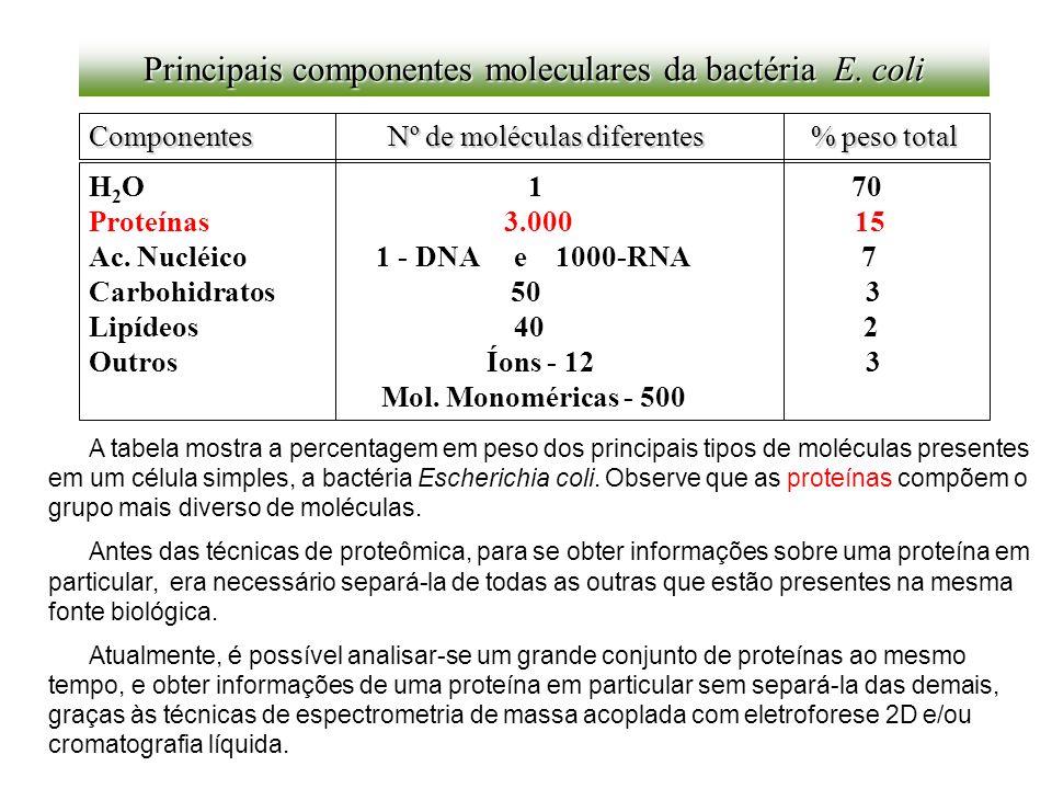 Principais componentes moleculares da bactéria E. coli